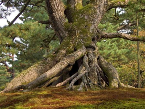 дерево_мини