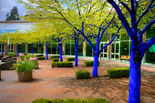 Blue-Trees_Port-Moody_Low-Res