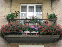 балкон_герань