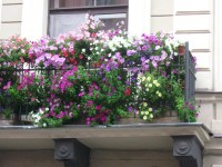 балкон_декабристов