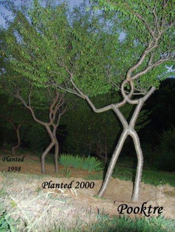 people-trees-13