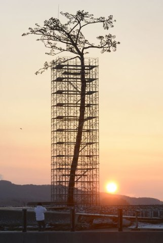 tsunami-tree_2505830k